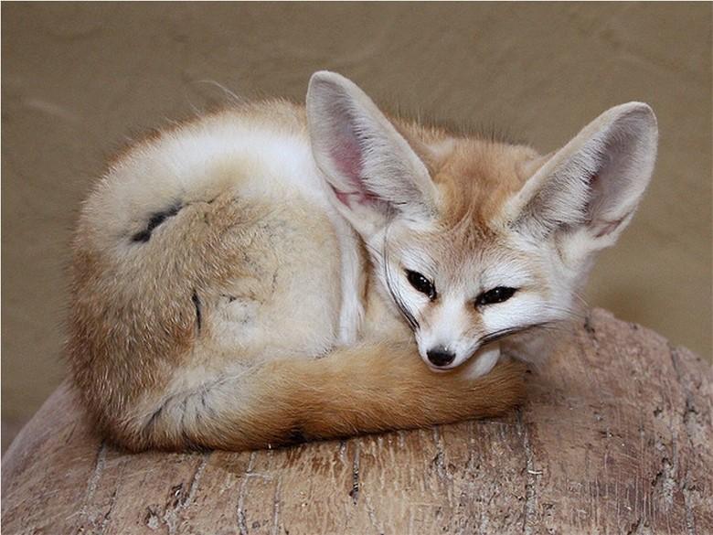 Топ 10 самых необычных домашних животных