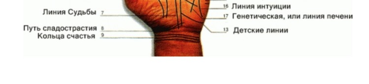 Самые значимые линии на руке