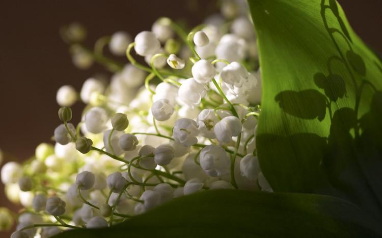 Что означают цветы в букете: азбука знаков