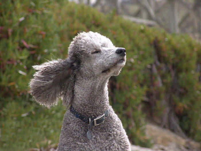 10 лучших пород собак для семей, в которых есть дети