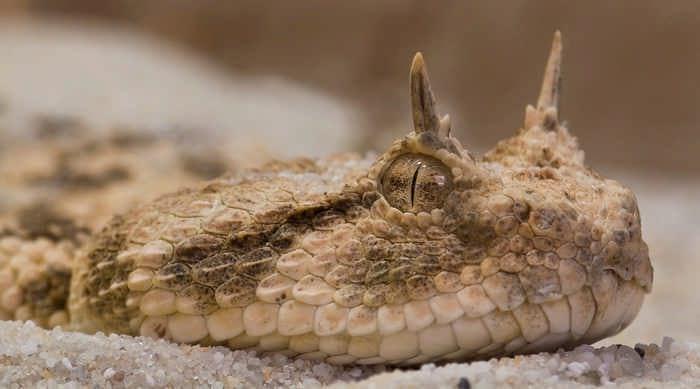 10 красивейших змей планеты