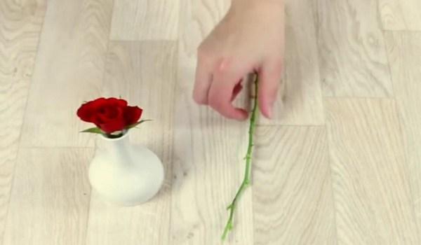 Как вырастить розу в картошке