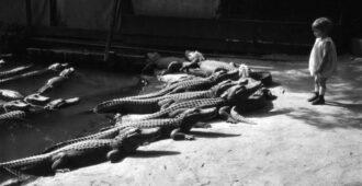 Это случилось в 1956 году в зоопарке Нью-Йорка