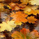 Календарь народных примет на ноябрь