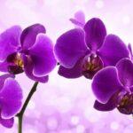 Самый лучший способ вылечить орхидею! На одной ветке потом будет много цветов! - Твой интернет