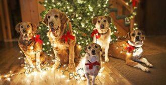 Как правильно встретить Земляную Собаку, символ 2018 года?