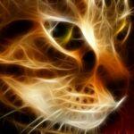 Не смотрите долго кошке в глаза