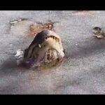 Из-за аномальной погоды в США аллигаторы вмерзли в лед - Твой интернет