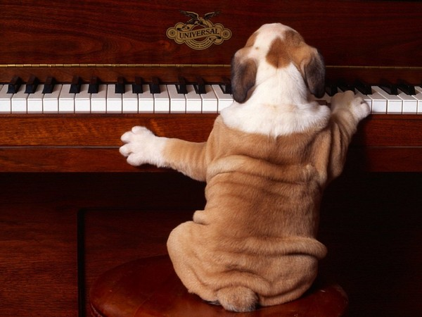 Кто написал собачий вальс