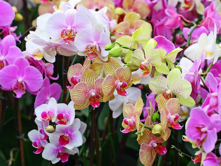 Чтобы орхидея цвела