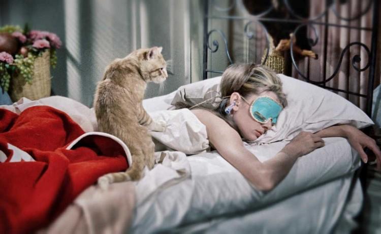 Почему кошки ложатся спать на хозяина