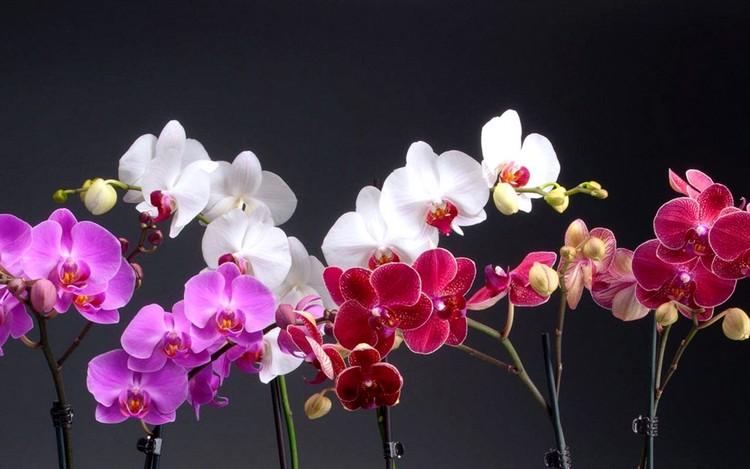 Почему нельзя держать дома орхидеи: приметы и суеверия