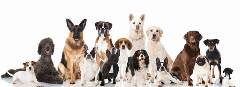 Знаете ли вы породы собак