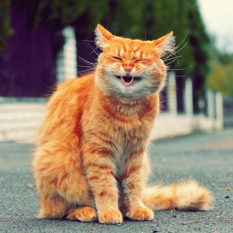 А домашние котики не такие уж и безобидные. Внимание, опасность, будьте бдительны