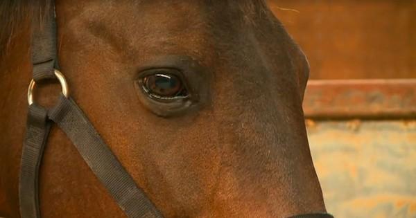 Невероятное событие потрясло хозяев этой лошади