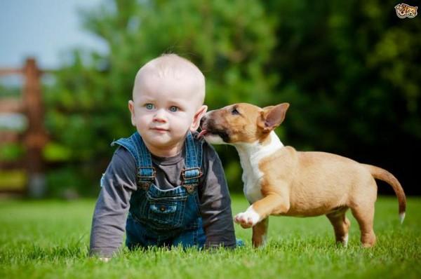 Не давайте собаке вас облизывать!