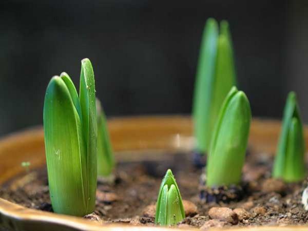 Какую рассаду сажают в феврале?