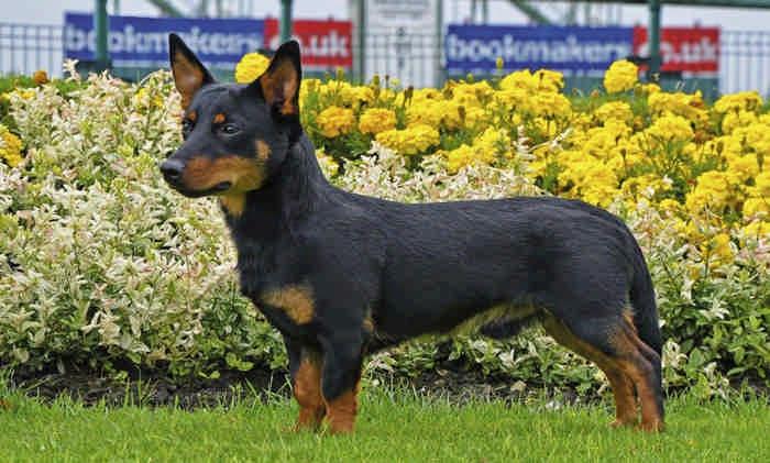 Все породы маленьких собак с названиями и фото