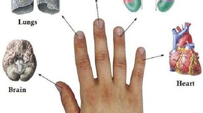 Каждый палец связан с двумя органами: японский метод лечения за 5 минут!