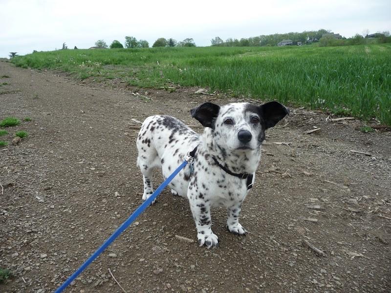 Необычные собаки, получившиеся в результате случайного скрещивания