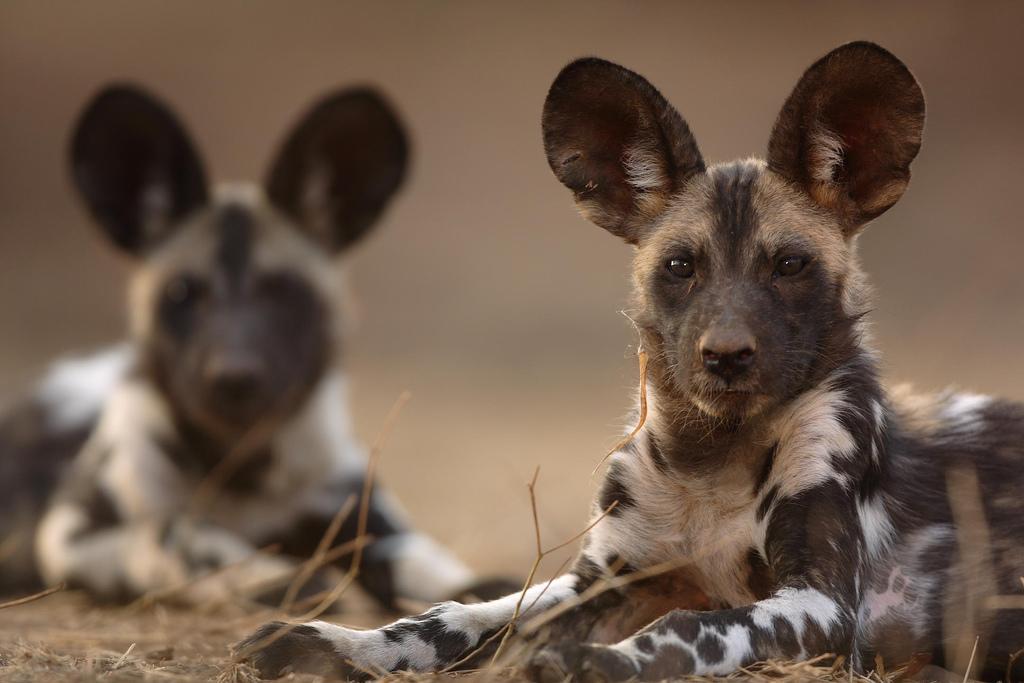 10 животных, которые влюбляются на всю жизнь
