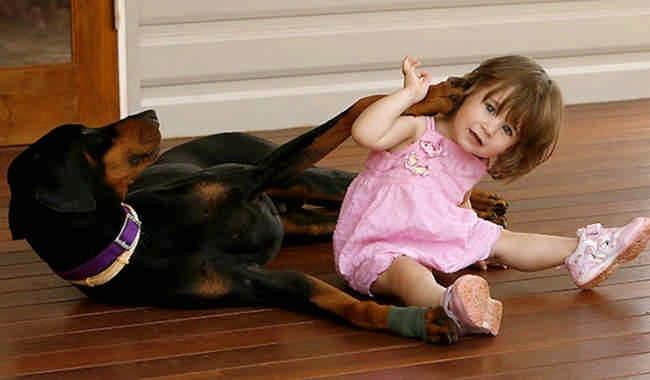 Малышка играла с доберманом, но вдруг пёс оскалился на девочку, зарычал и схватил ее…