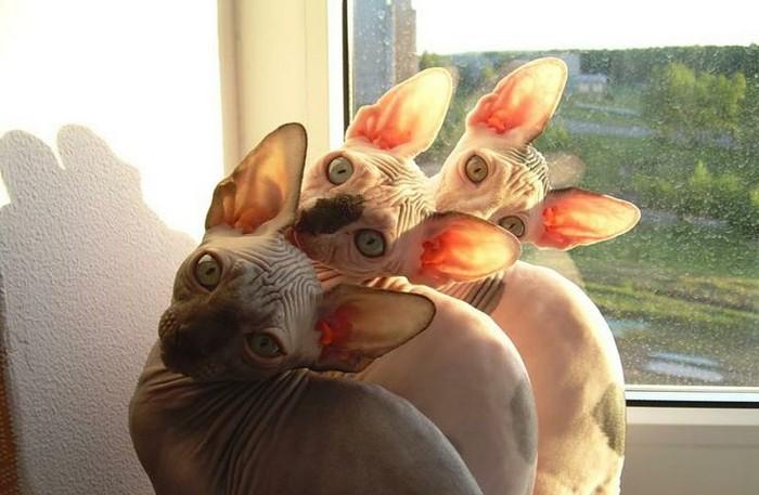 Вся правда о котах: что наука знает о домашних любимцах