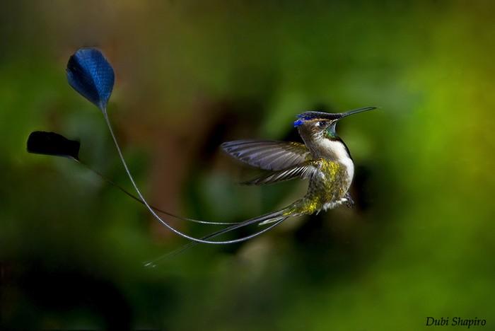 Самые редкие и удивительные птицы в мире