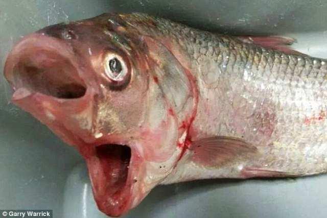 10 невероятных морских существ, обнаруженных недавно