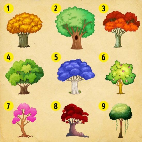 Выберите дерево и узнаете, что вам ожидать в 2018 году