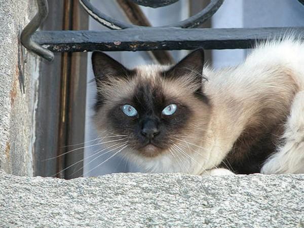 Какую кошку лучше выбрать для семьи?