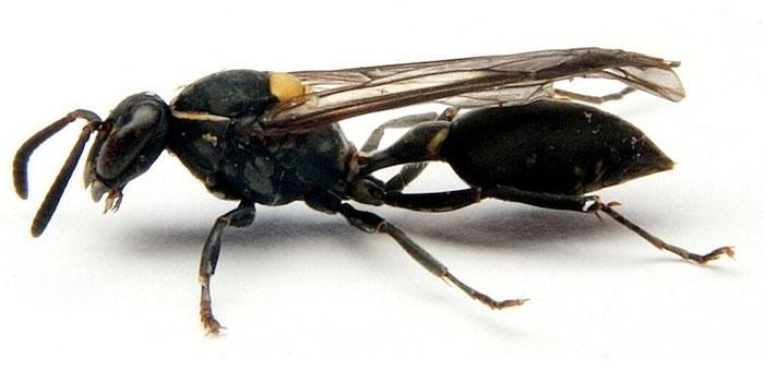 Так вот зачем нам осы!