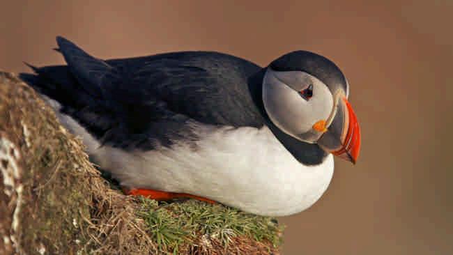 Самые красивые птицы в мире: Топ 10