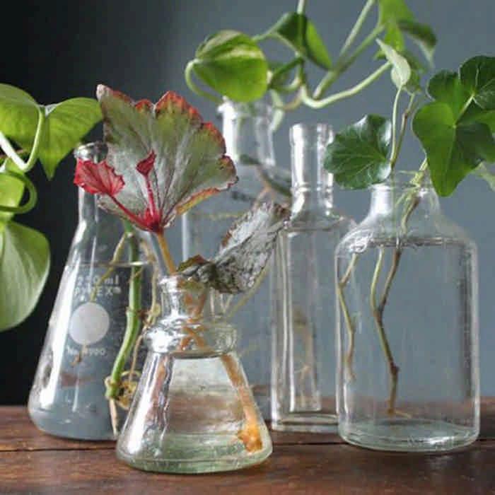 Разведите всего лишь одну таблетку вечером, и цветы будут радовать вас весь год