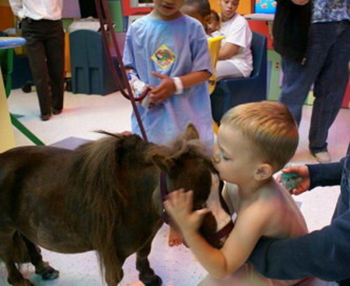 Эта лошадка — самая маленькая в мире. Но обаяния ей точно не занимать!