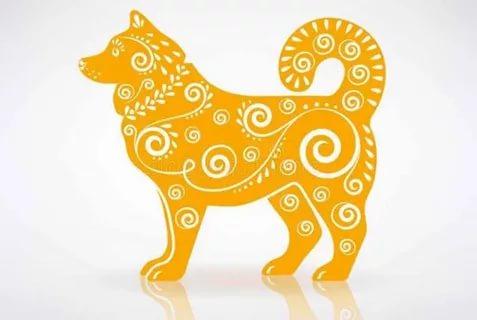Тонкости и нюансы повадок Желтой Собаки