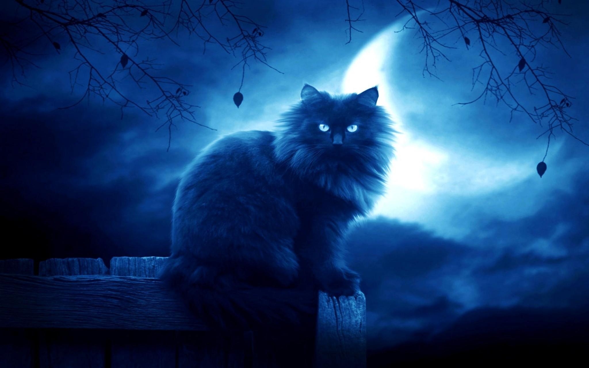 свадебное мистические картинки с кошками котик