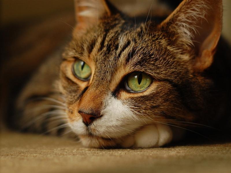 Вот как кошки чувствуют смерть человека…