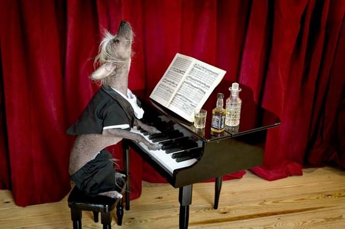 """Кто написал """"Собачий вальс"""", который каждый второй умеет играть на пианино?"""