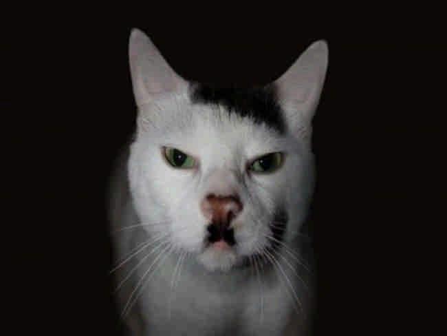 Какой потрясающий художник раскрасил этих 18 кошек?
