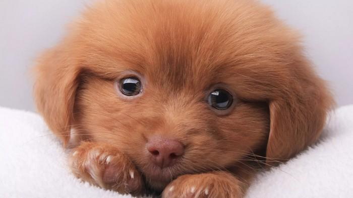 Интересные факты о любимых собаках