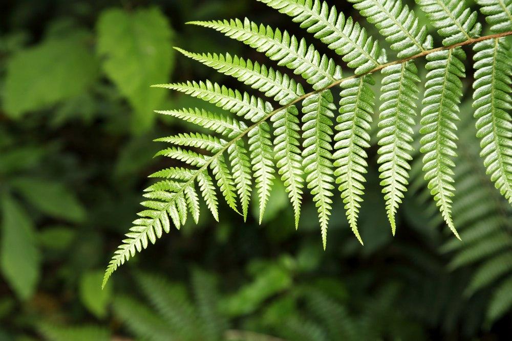 5 растений, которые помогут лучше спать